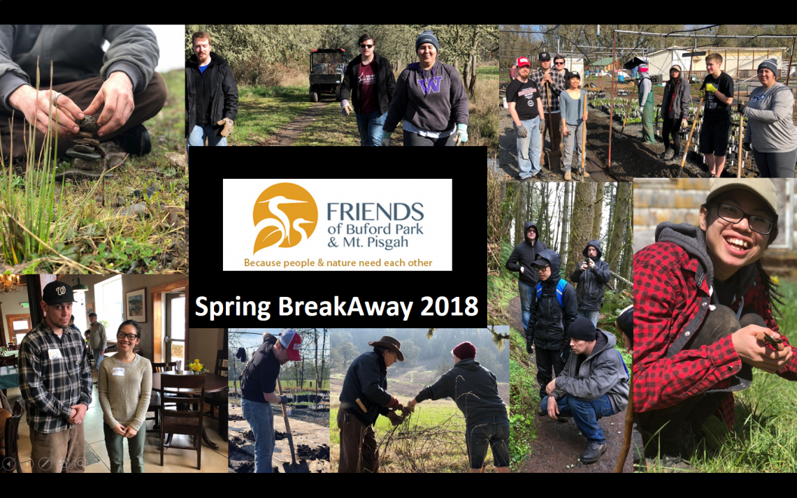 A collage of multiple photos from the 2018 Buford Park trip. It shows volunteers working in various conditions outdoors.
