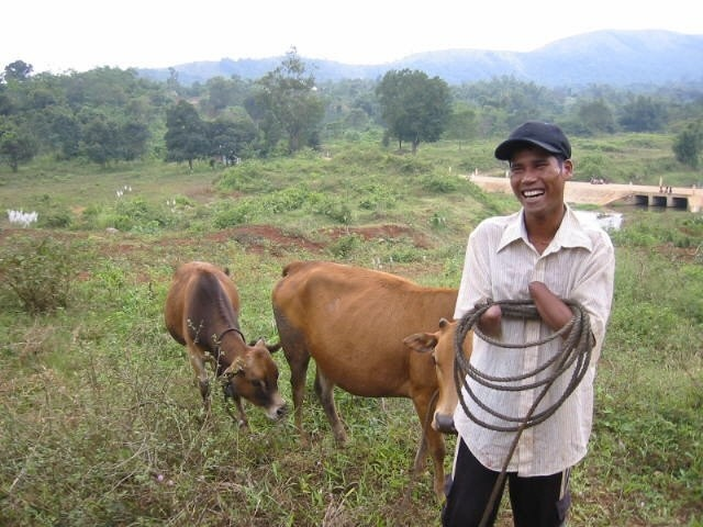 peace-trees-ho-van-kim-w-cows