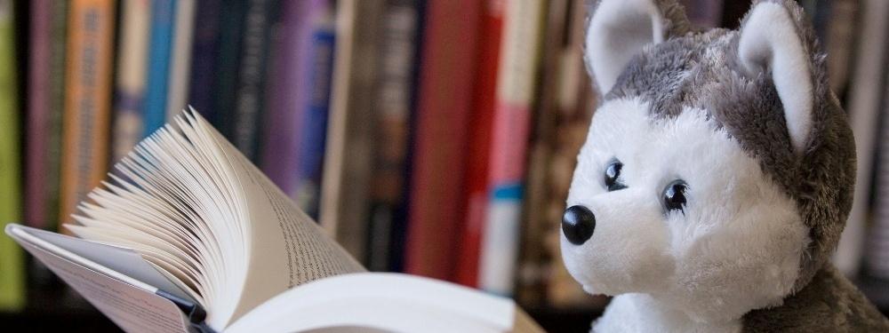 Photo of plush husky reading a book